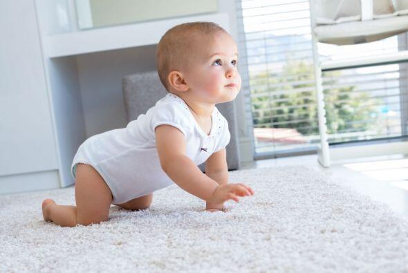 Todo les llama la atención a los bebés. Están descubriendo el mundo y tú...