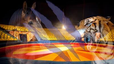 Contenido gráfico - Un caballo es brutalmente atacado por un tigre y un león durante ensayo de circo chino