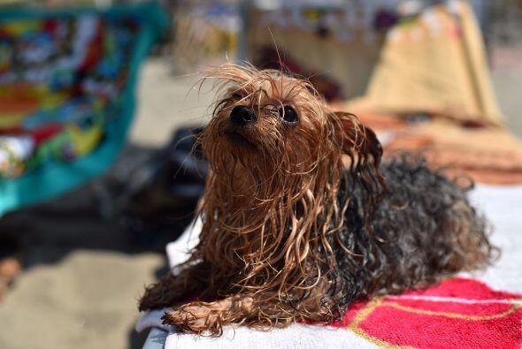 BauBeach es una playa cerca de Roma en la que hay igual número de perros...
