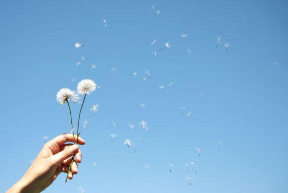 Tus flores son la orquídea, el gladiolo y el narciso, el diente de león...