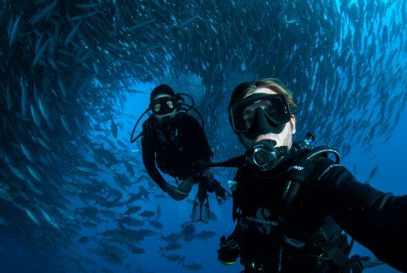 Caine, biólogo marino, se las arregló para sacar unas cuantas 'selfies'