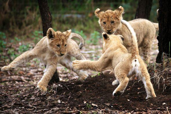 De vez en cuando pelean, pero como son hermanos de inmediato se perdonan.
