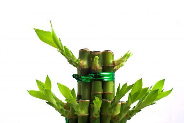 Uno de los principales beneficios de las toallas de bambú es que...