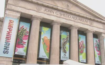 Acuario Shedd tendrá entrada gratuita a finales de enero