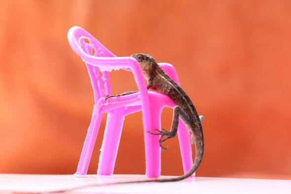 Por eso buscó dónde sentarse, ¡y lo encontró!
