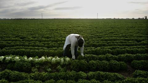 La unión de campesinos celebra su apoyo a la propuesta que busca otorgar...