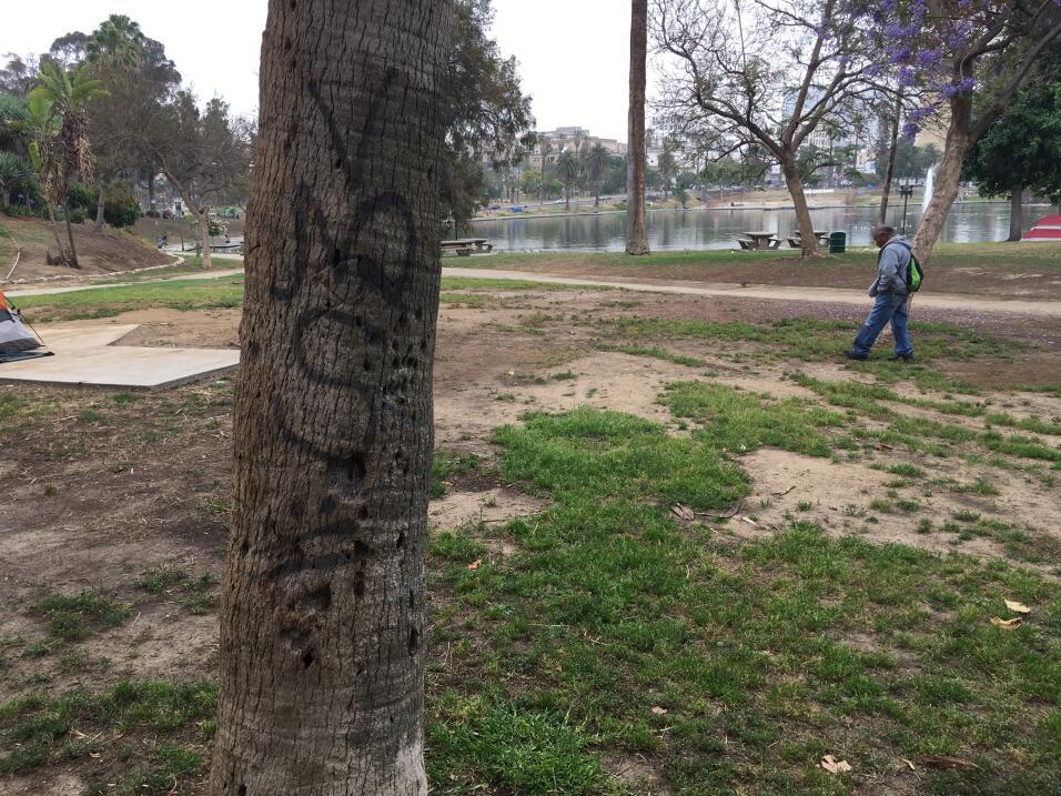Insignias de la Mara Salvatrucha en el parque MacArthur.