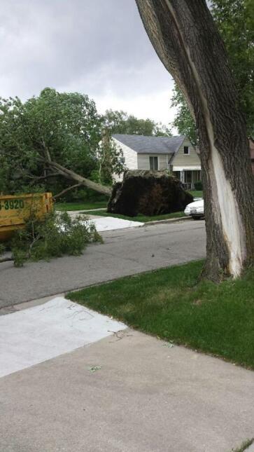 Fuertes vientos causan árboles caídos en Berwyn