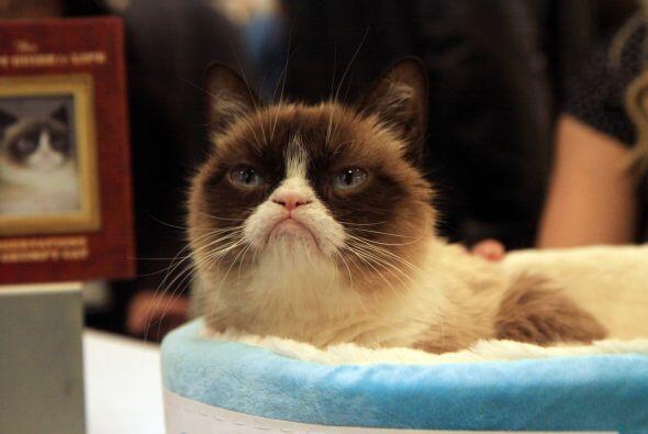 'Grumpy Cat' es el apodo con el que registraron este felino por su cara...