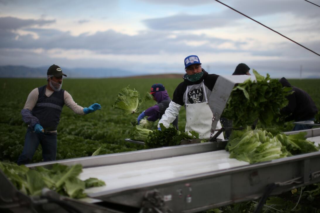 Agricultores Inmigrantes en California