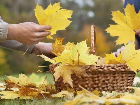 Llegó el otoño y hay muchas actividades para hacer con ni&...