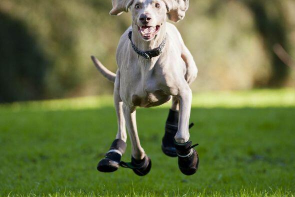 Ahora Bluey puede correr y jugar muy feliz porque las botas mantienen ca...