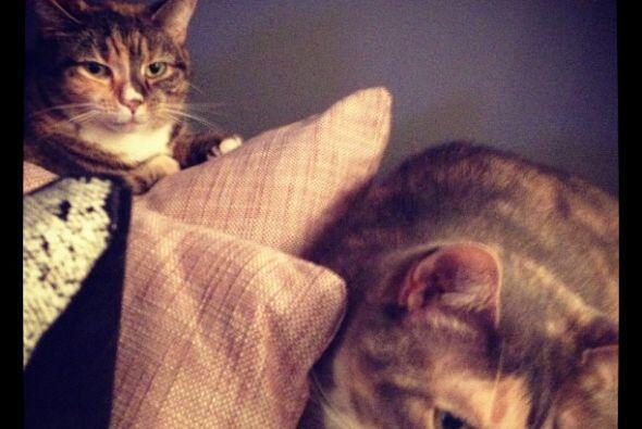 Sus gatitas disfrutan ser fotografiadas y posan juntas sin problemas.