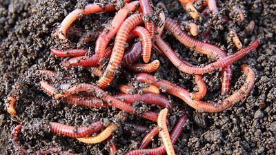 Worms wriggle through soil