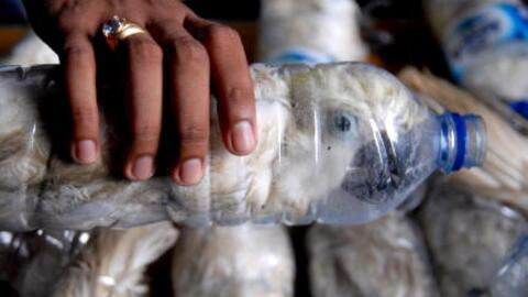 22 cacatúas sulfúreas fueron decomisadas en la aduana del...