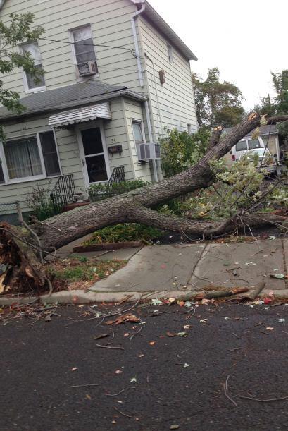 Árbol caído en Montgomery Village. Foto de Tomas Miranda en 'Tu Camara'
