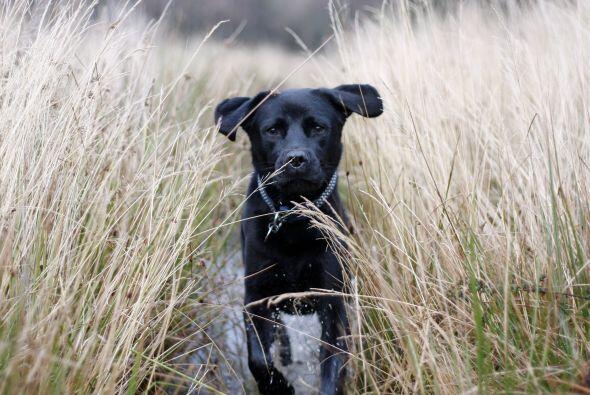 Ruby no es un perro cualquiera, aunque pareciera como cualquier otra mas...