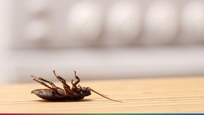 'Leche de cucaracha' la nueva tendencia alimentaria que podría llegar a tu cocina en el futuro