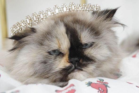 Cualquiera puede pensar que los gatos en general son caprichosos y exige...