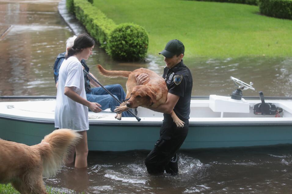 Harvey Mascotas