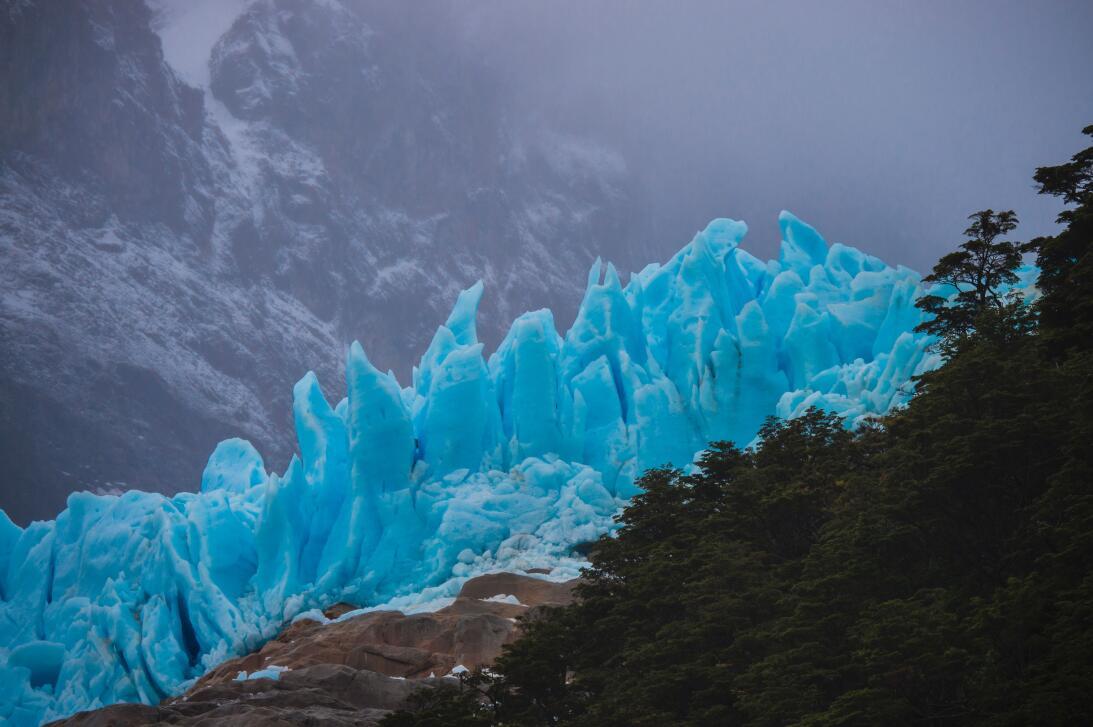 Junto al glaciar Serrano, un bosque se alza en el horizonte. Ese es el c...