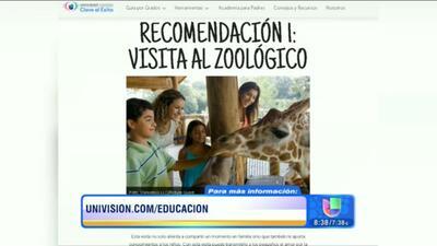 Campamento virtual para que sus hijos sigan aprendiendo en verano