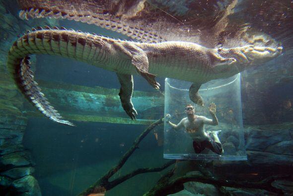 ¿Has pensado cómo es encontrarse cara a cara con un inmenso cocodrilo?