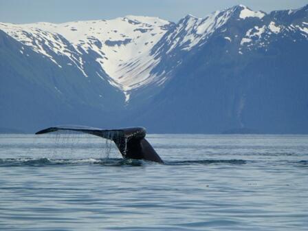 Como su nombre lo indica, el Parque Nacional Bahía Glacier es, en gran p...