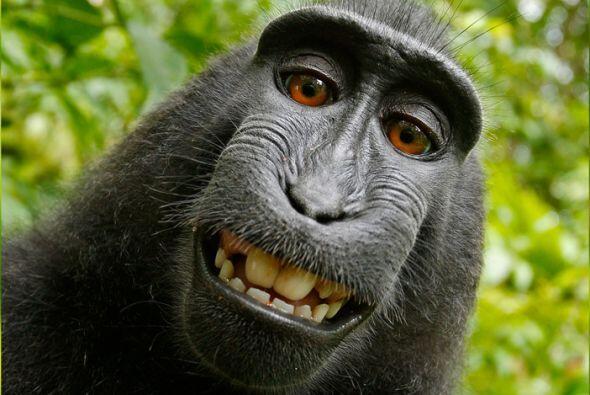 Un mono muy travieso tomó la cámara de un fotógrafo...