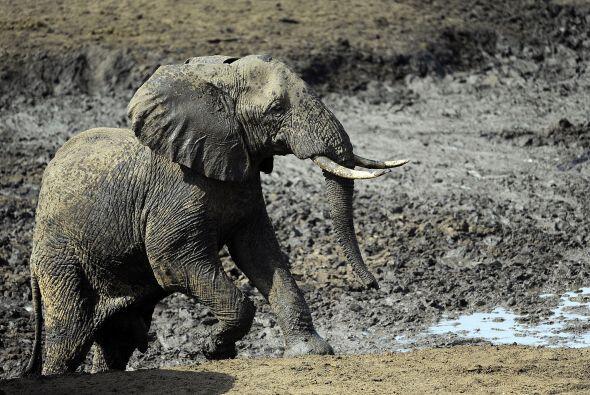 """""""El único futuro para los elefantes es que los gobiernos, las organizaci..."""