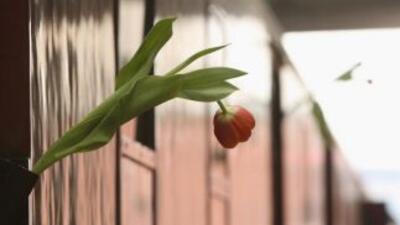 Una flor en uno de los vehículos de pasajeros que alberga una exposición...