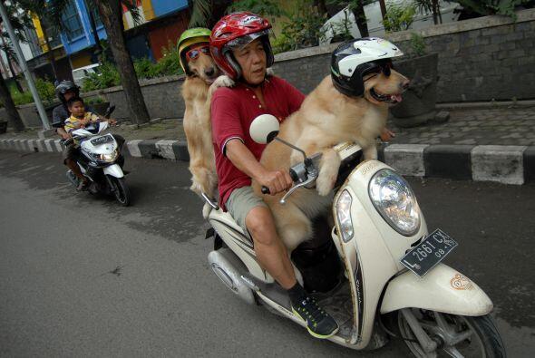 Sin embargo, hay algo que hace diferentes a estos perros.