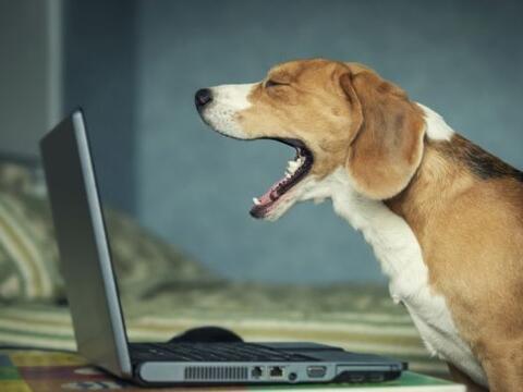Una página ofrece un excelente servicio: ¡comprar un perrit...