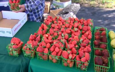 Logre hacer rendir el valor de sus cupones de alimentos y apoye a agricu...