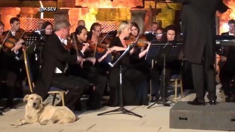 Este perro se convierte en el protagonista durante un concierto de músic...
