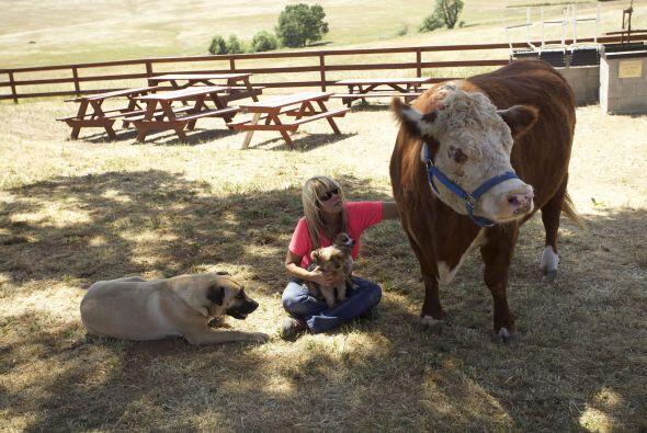 'Milkshake' tiene una nueva vida y ahora un corazón de perro. &iq...