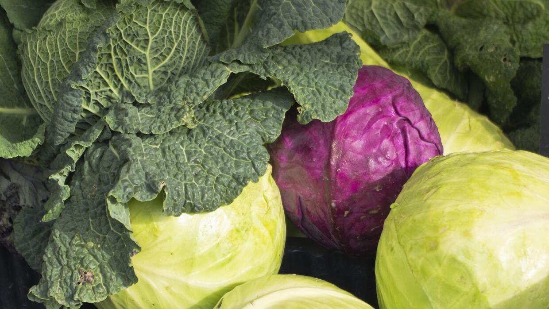 Col verde y morada, básicas en la ensalada Coleslow