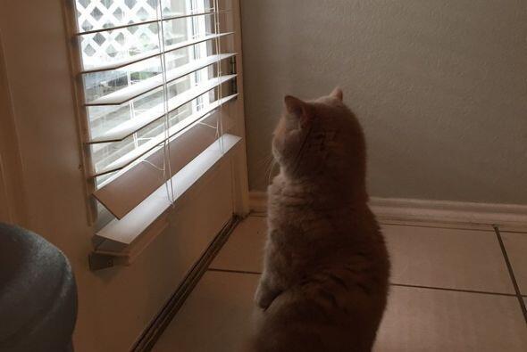 Él vigila a todos, por si acaso. Sabe que la información es poder.