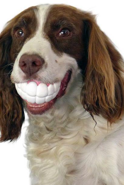 No importa desde qué perspectiva sea visto: ¡tu can lucirá genial!