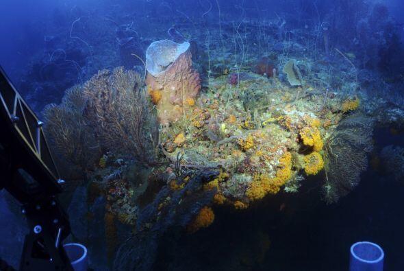 """""""Todo lo que se sabe acerca de la biodiversidad en arrecifes profundos e..."""