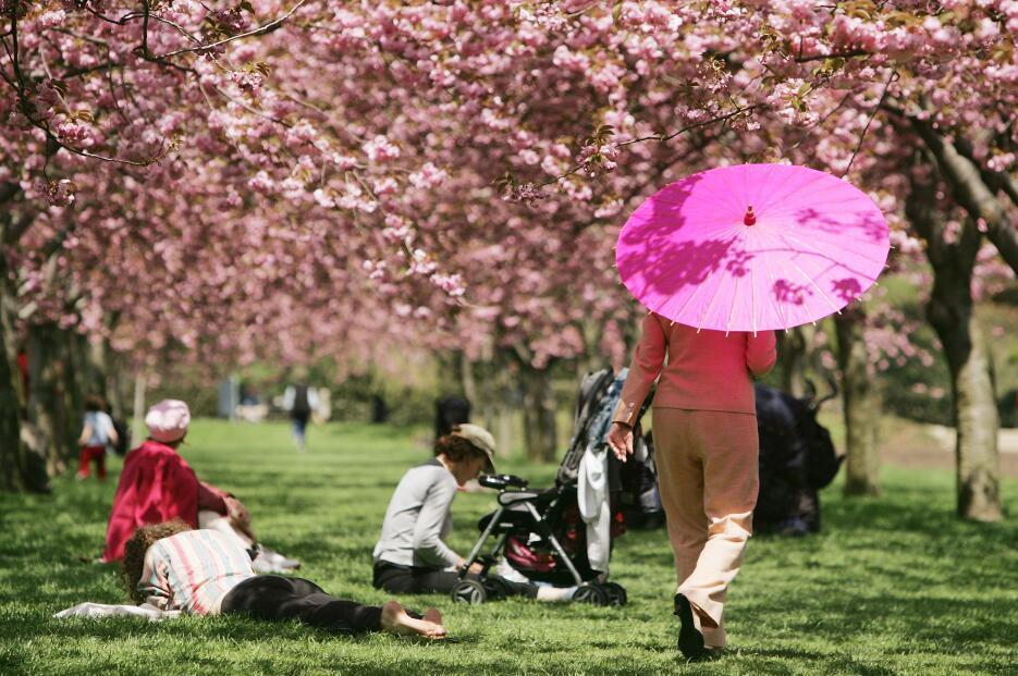 El Jardín Botánico de Brooklyn se viste de pétalos rosados