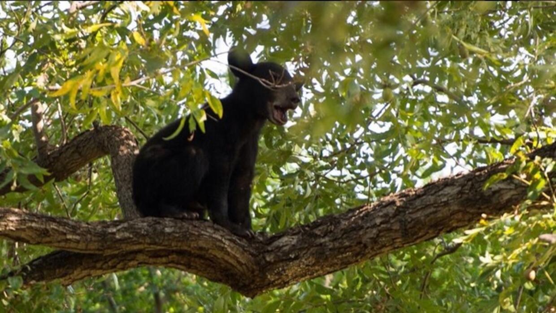 Foto del oso