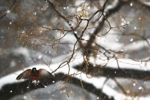 El frío, la nieve y los árboles desnudos impiden la fabric...