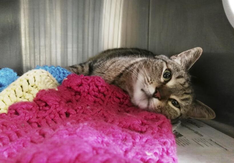 La gata BooBoo vivía en Watsonville, California.