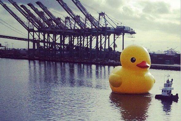 El Patito Gigante, mejor conocido como el # #RubberDuck ya llegó al Puer...