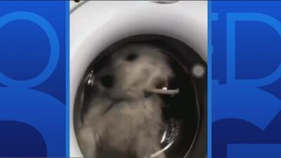 Prendió la lavadora con su perro dentro para conseguir 'likes', ahora sufre las consecuencias