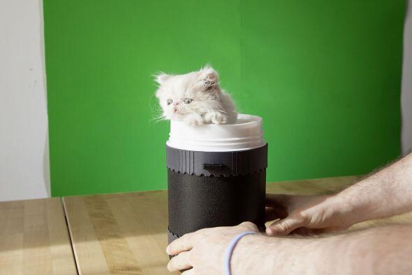 Un hombre ha utilizado su pequeño gato para crear una serie de imágenes...