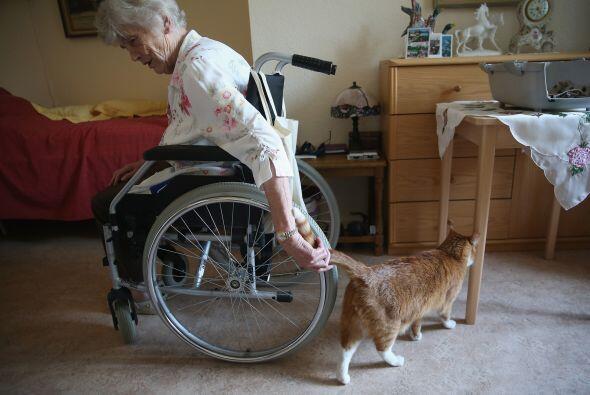El gato ronronea por los pasillos para recibir caricias, es una forma de...