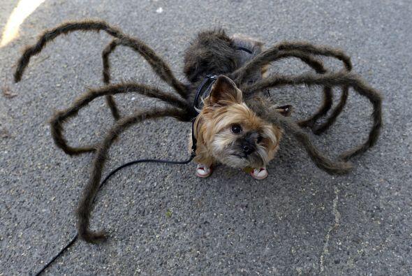 Pero si lo tuyo es más extremo, unas patas extra a tu perro no ve viene...