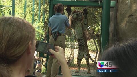 Zoológico de Houston permitirá entrada a personas armadas